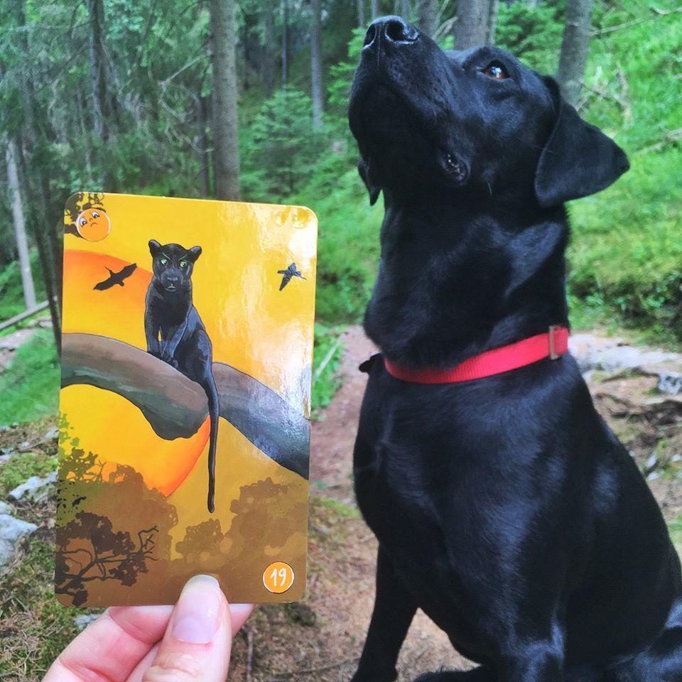 pes, karty pre deti