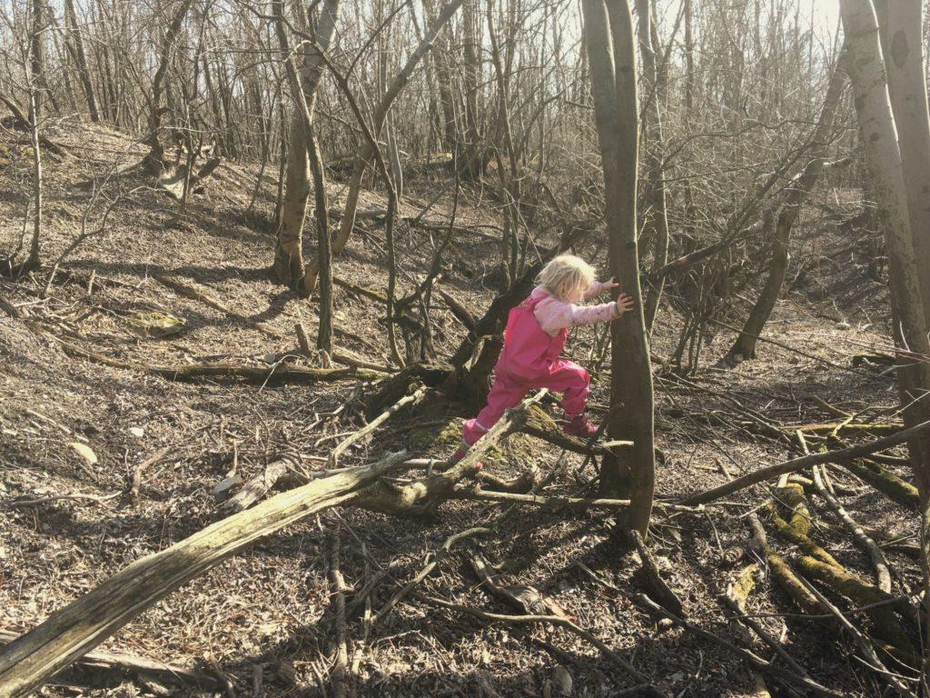 lesné škôlky, príroda, les